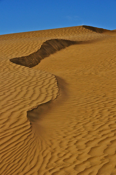 TR-Nature's Curves-Great Sandhills of Saskatchewan-Hans Holtkamp - Print
