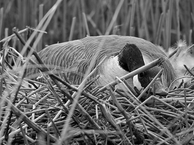 BW-Hiding in The Marsh-Ian Sutherland
