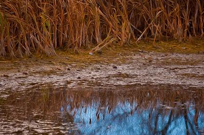 AR-Prairie Swamp-Lien Dinh