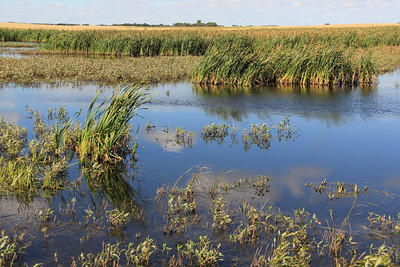 TR-Prairie Marsh-Hilda Noton