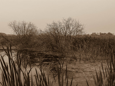 BW-Prairie Marsh-Gail Fulkerson