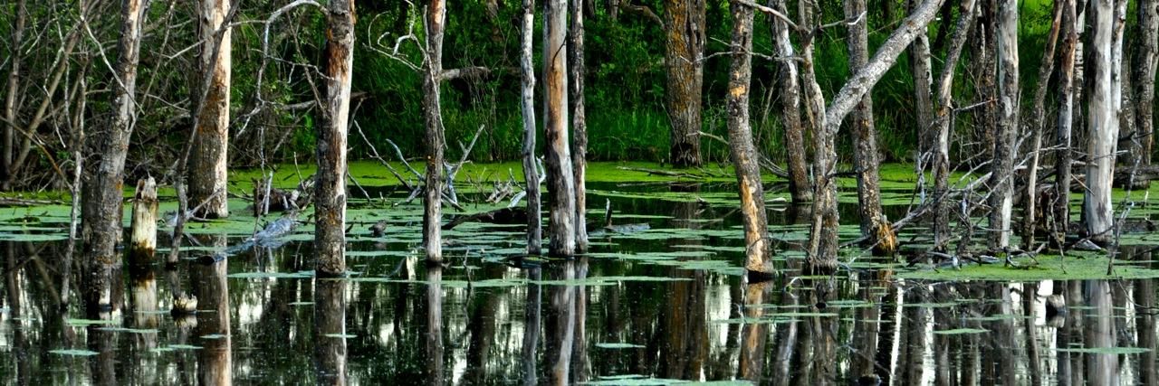 TR-Saskatchewan's Everglade-Hans Holtkamp