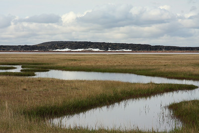 TR-Spot the Tundra Swan-Richard Kerbes
