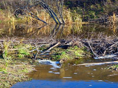 TR-Beavers Dam It-Gayvin Franson