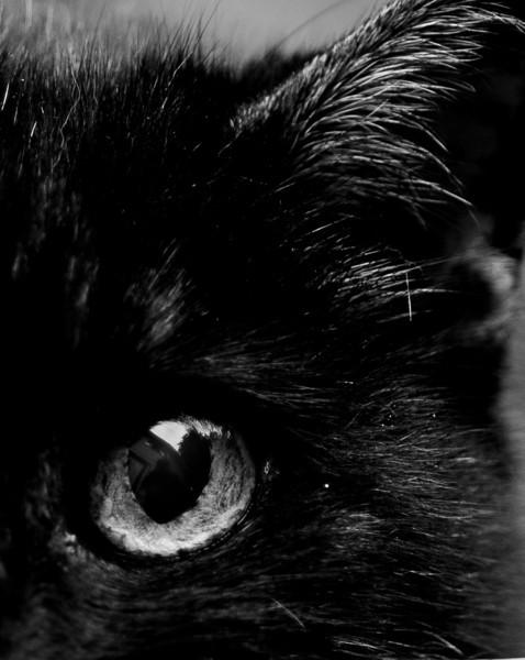 BW-Cats Eye-Kathy Meeres