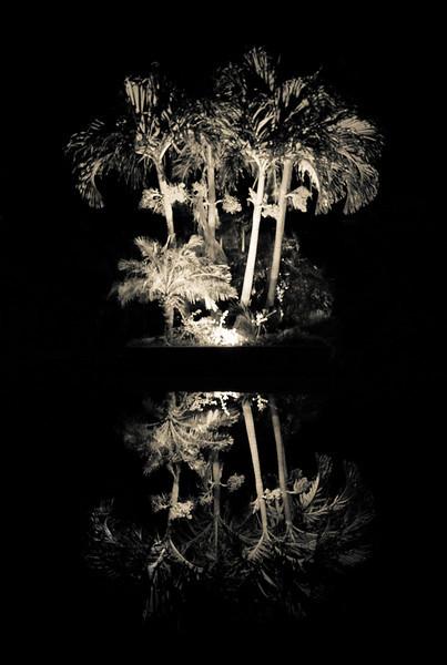 BW-Dark Mirror-Cathy Anderson