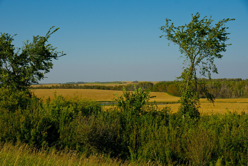LS-Country Vista-Anita Simpkins