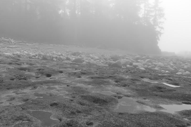 LS-Botanical Beach-Jannik Plaetner