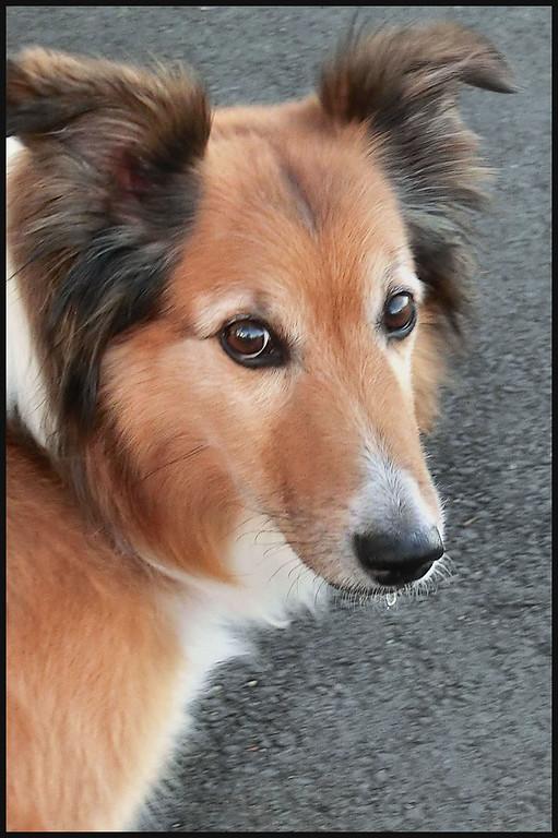 TR-Lassie Come Home-Karin Buchanan