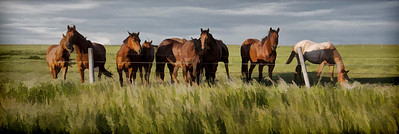 AR-All The Pretty Horses-Brian Barnhill