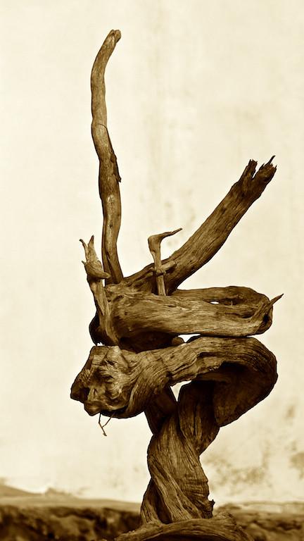 BW-Driftwood Dancer-Nina Henry