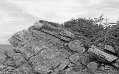 BW-Windswept-Ian Sutherland