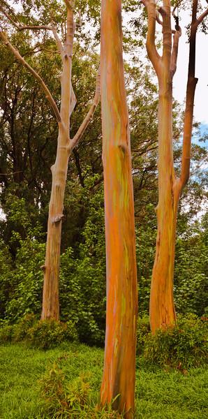 Print-TR-Rainbow Eucalyptus Trio-Brian Yurkowski