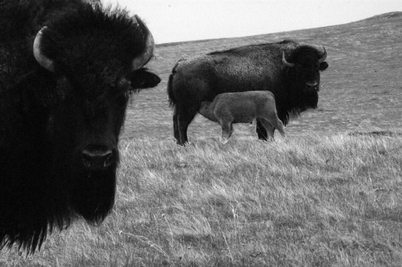 BW-Prairie Family-Elizabeth Chant