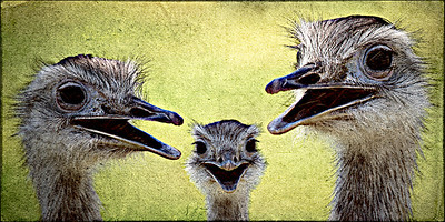 AR-The Three Stooges-Nina Henry