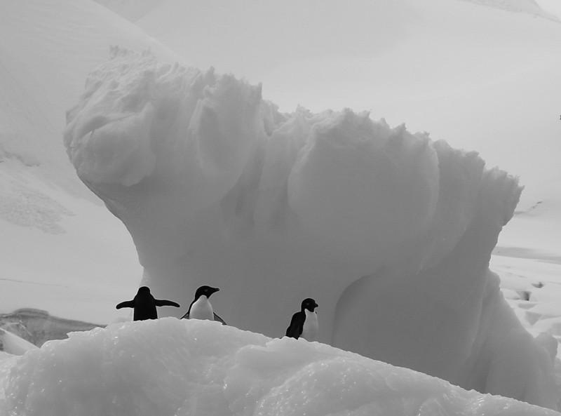 BW-Our Friendly Iceberg-Richard Kerbes