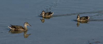 TR-Get All Your Ducks in a Row-Anita Simpkins