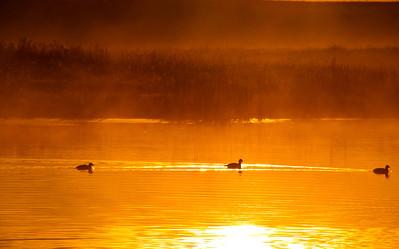 BW-3 Ducks-Gerry McLellan