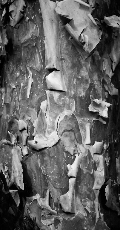 AB-BW-Nature's Abstract-Rhea Preete