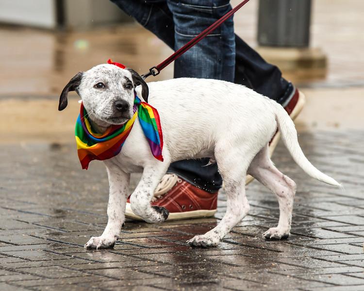 2014 Saskatoon Pride Parade