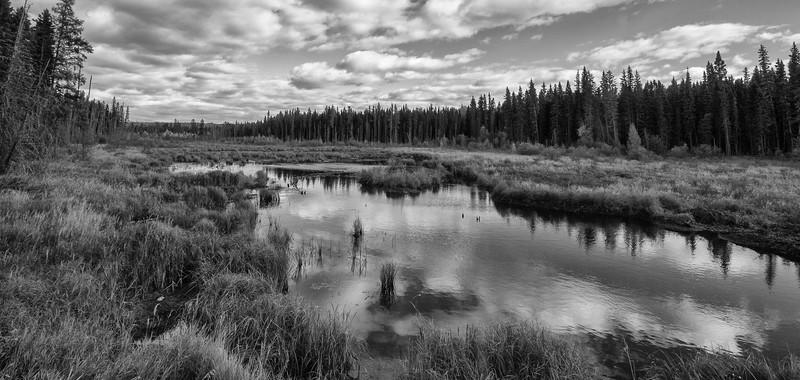 SC-BW-Beaver Pond-Michael Cuggy