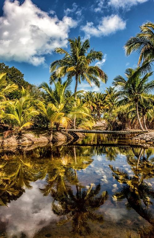 SC-TR-Bahamian Pondscape-Nina Henry