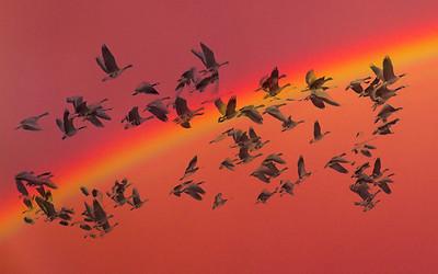 AR-Somewhere over the Rainbow-Cathy Anderson
