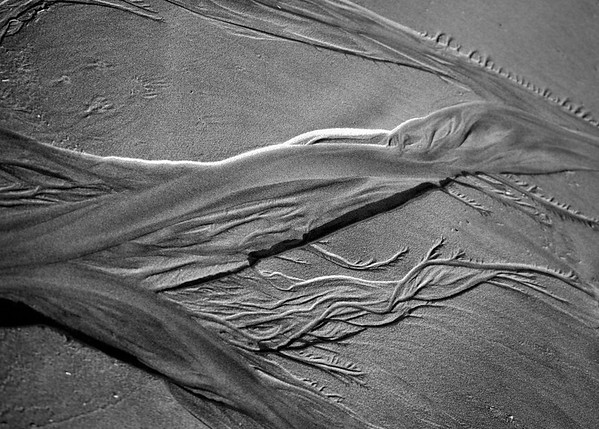 BW-Sculpted by the Sea, Hardened by the Sun-Mary Lou Fletcher