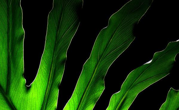 TR-Green Fingers-Bill Compton