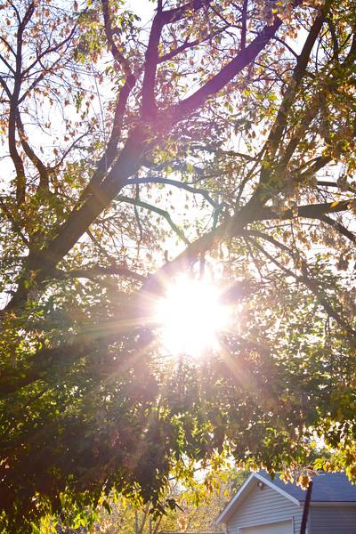 TR-Backyard Sunshine-Kristina Rissling