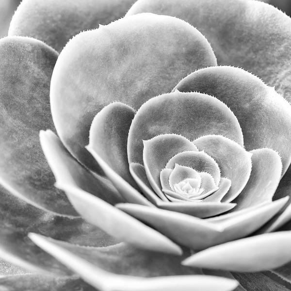BW-Succulent-Scott Prokop