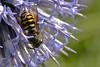 TR-Busy Bee-Doris Santha
