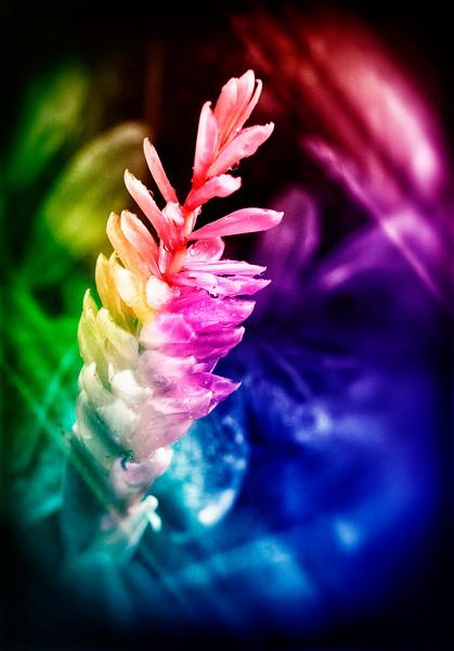 AR-Psychedelic Flower-Ken Greenhorn