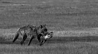 BW-Nature's Take Out-Bas Hobson