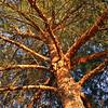 TR-Branching Out-Doris Santha