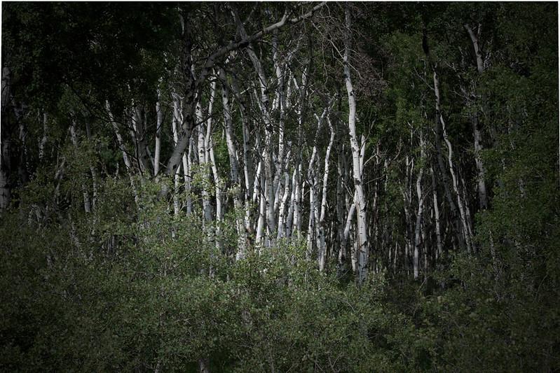 AR-Hidden Grove-Ian Sutherland