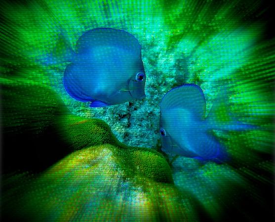 AR-Dive Down-Nina Henry