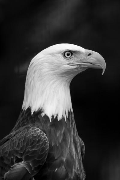 SF-Eagle Eye-Rhea Preete