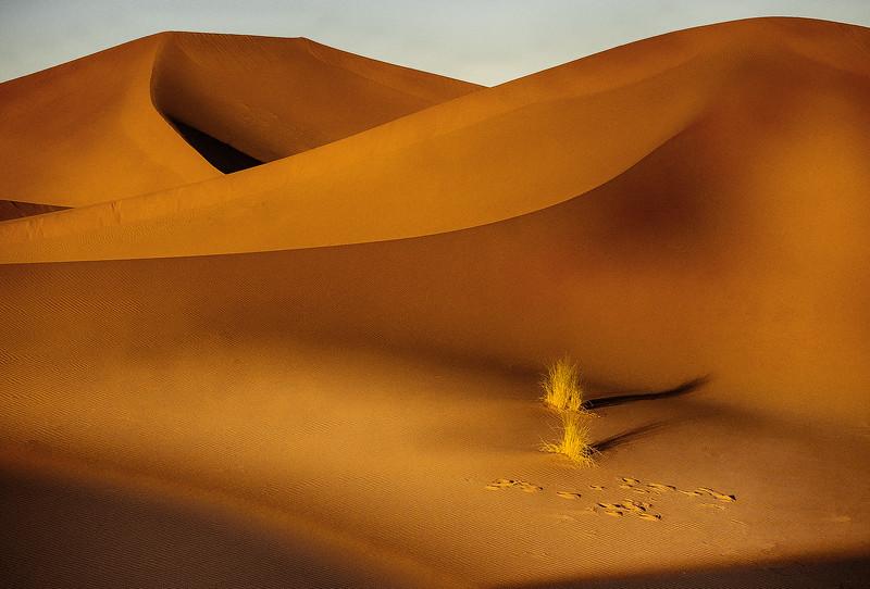 TR-Life in the Desert-Barry Singer