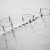BW-Winter Garden-Ron Cooley