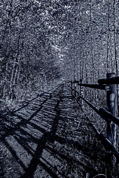 1Print-BW-Five o'clock Shadow-Brian Yurkowski jpg