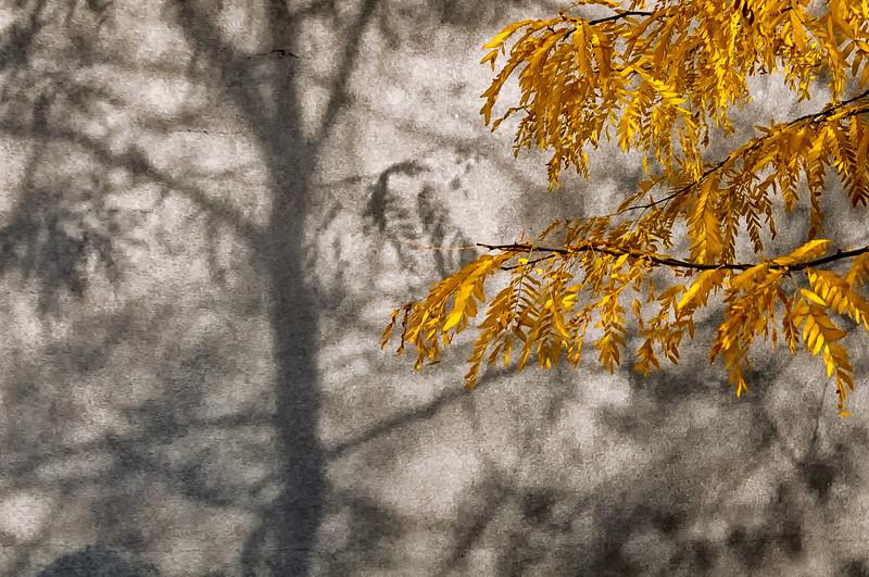 TR-Autumn Shadow-Hans Holtkamp
