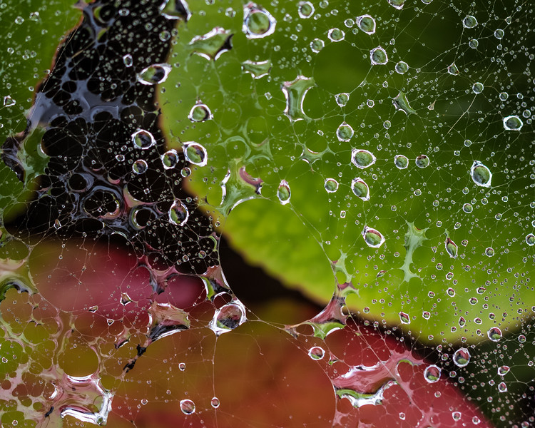 AB-Wet Webs-Jacqui Ferguson
