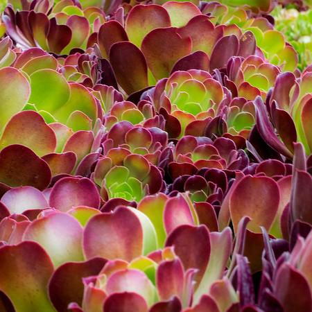 AB-Garden of Colour-Barry Singer