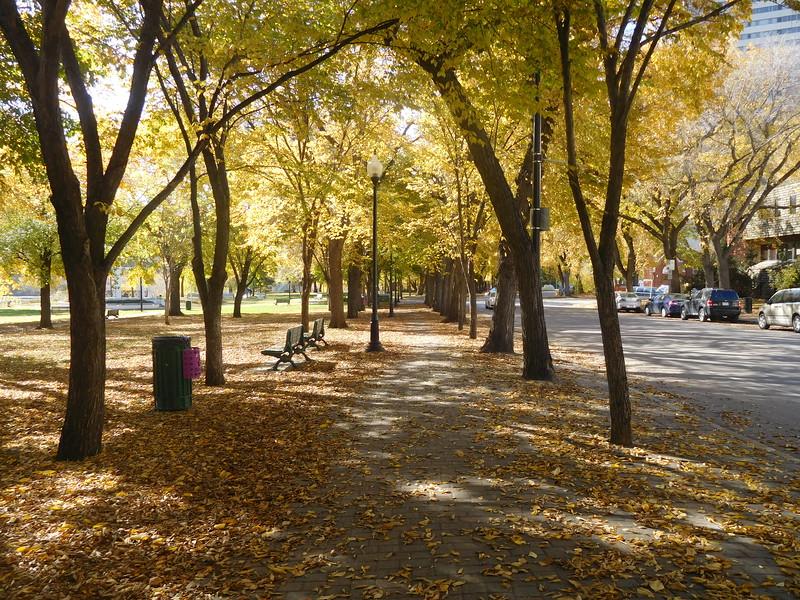 TR-Walk in the Park-Jessica Dyok