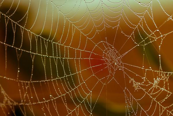 TR-Golden Web-Rae McLeod