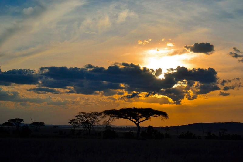 TR-Serengeti Plains-Cassandra Childs