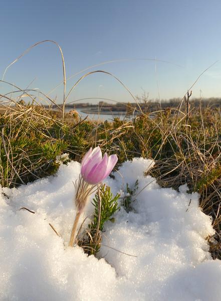 1Print-TR-Spring Surprise-Gayvin Franson