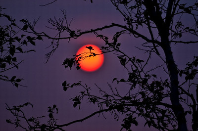 AR-Eerie Summer Sunset-Anita Simpkins