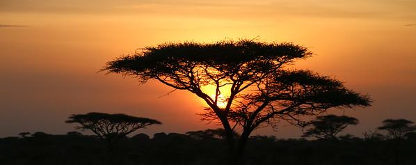 SC-Serengiti Sunrise-Gayvin Franson